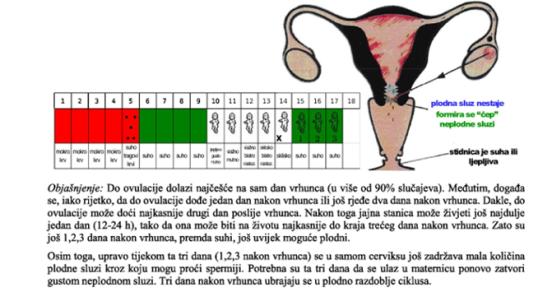 Menstruacijski ciklus 4
